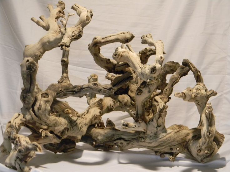 Gargoyle Gecko Wood Perches and Branches :The Reptile Tree ...