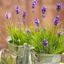 Studio Florystyczne Lawendowa Weranda najbardziej romantyczna kwiaciarnia w…