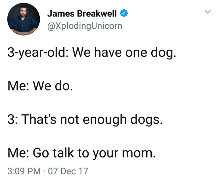 Me: We have three dogs. Dad: We do. Me: That's not enough dogs. Dad: Go talk to Mom, demand another dog.