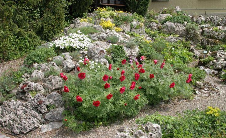Bodendecker pflanzen, pflegen und Tipps Bodendecker - steingarten anlegen mit vlies
