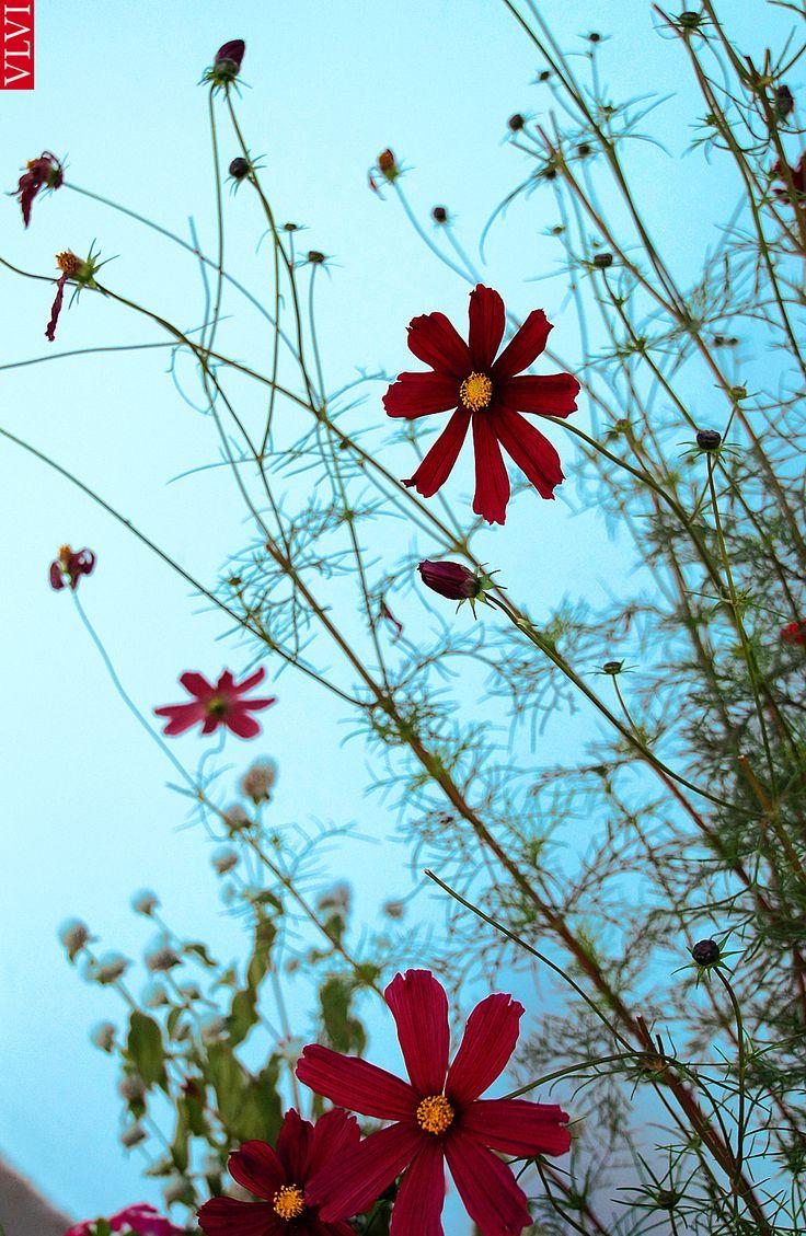 'Flowers'. oct. 2014 | Van Lieshout VI | #photography.