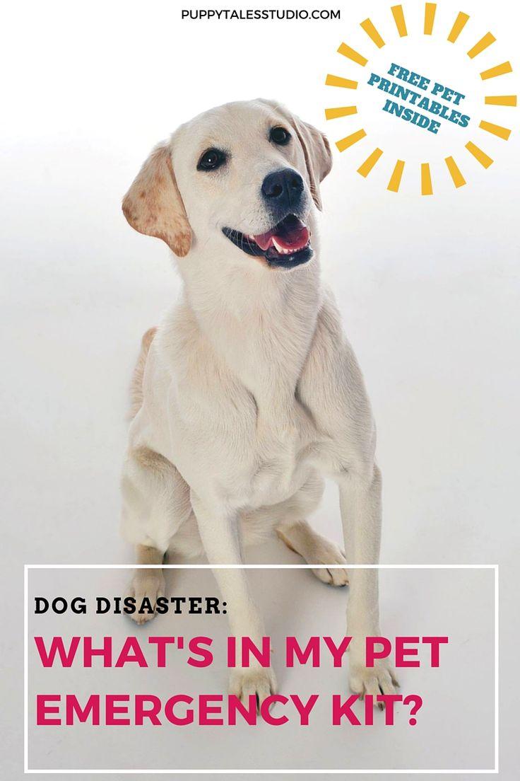 398 best corgi girls images on pinterest corgis dog stuff and dog