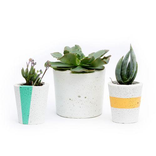 Pop Plant - Tait