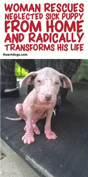 Woman Rescues Neglected Sick Puppy From Home And Radically Transforms His Life!