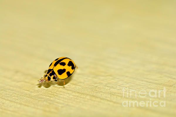 #LADYBIRD #SWIMMING #minimalism by #Kaye #Menner #Photography Quality Prints Cards Products at: http://kaye-menner.pixels.com/featured/ladybird-swimming-by-kaye-menner-kaye-menner.html