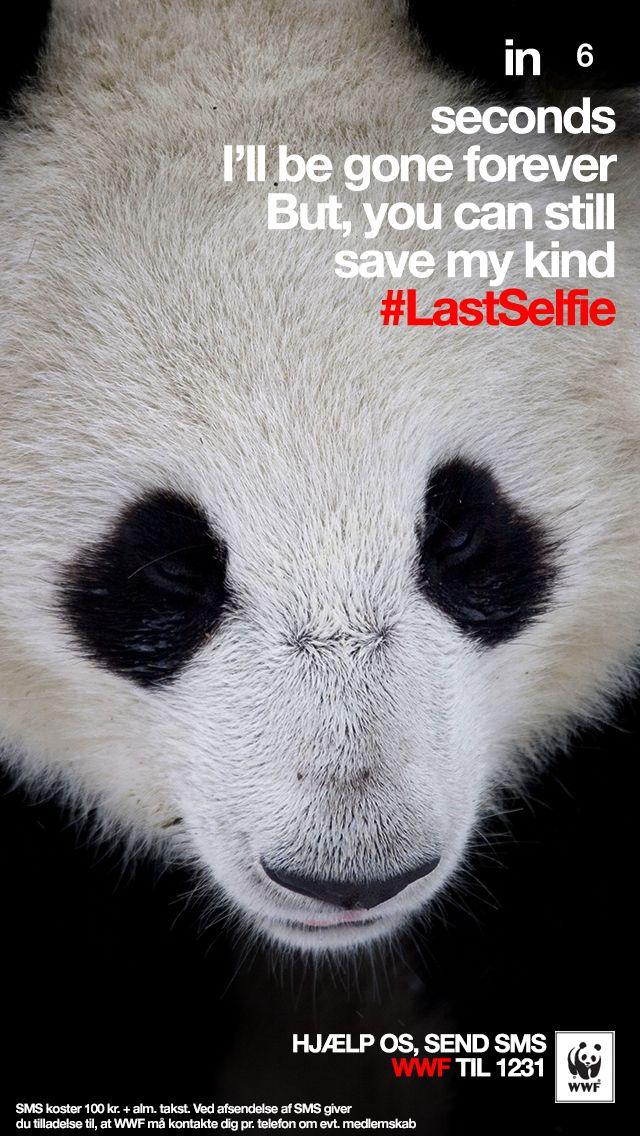 WWF : #LastSelfie campaign by Grey, Denmark / Turkey (april 2014)