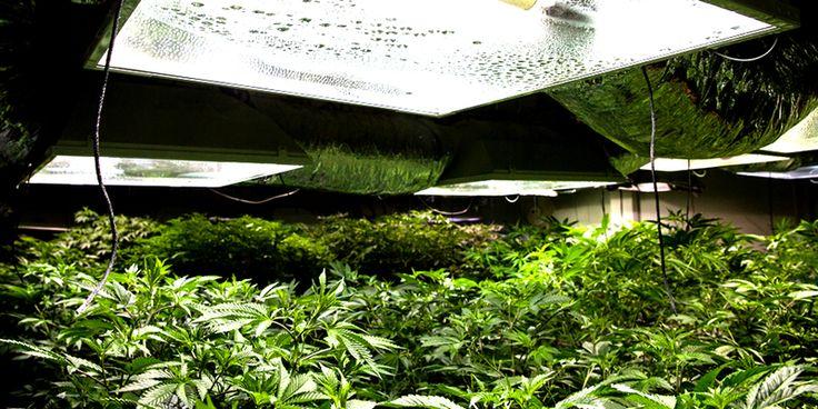 MH And HPS Grow Lights For Marijuana