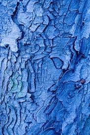 tree bark: Trees Bark, Texture Trees, Blue Bark, Color Blue, Gum Trees, Blue Patterns, Beauty Blue, Blue Faces, Art Mosaics