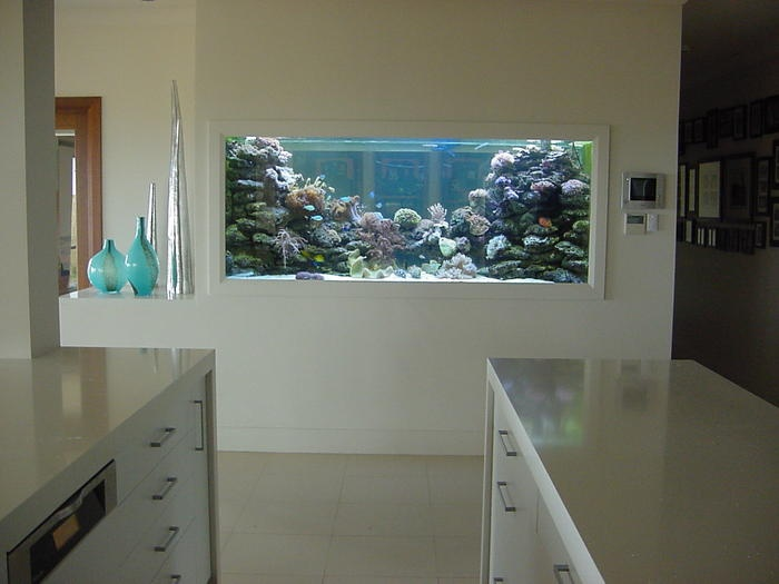 really cool built-in reef aquarium
