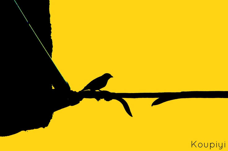 •visit my blog: koupiyi@tumblr.com Make that step to check your wings, 2013  bird,yellow,black