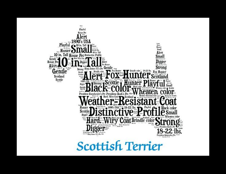Traits of the Scottish Terrier Only in the late 1800s can the Scottish Terrier's history be confidently documented. Of the several short-legged, harsh—coated terriers, the dog now known as the Scottis