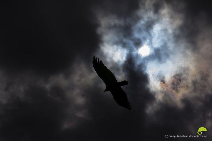 Dark Wings by Orangutan-Klaus.deviantart.com on @deviantART