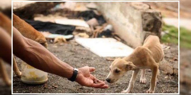 Recently, the Greater Hyderabad Municipal Corporation (GHMC) has helped facilitate the adoption of 100 stray dogs under the 'Maa Inti Nestham' stray dog adoption programme. #straydogadoption #sterilisesthedogs #dogexpress
