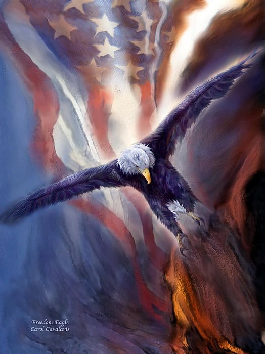 Let freedom fly, strong and proud. This painting of a bald eagle in flight with an American Flag in the background, is from the Patriotic Collection of art by Carol Cavalaris. Design is also available without the flag.