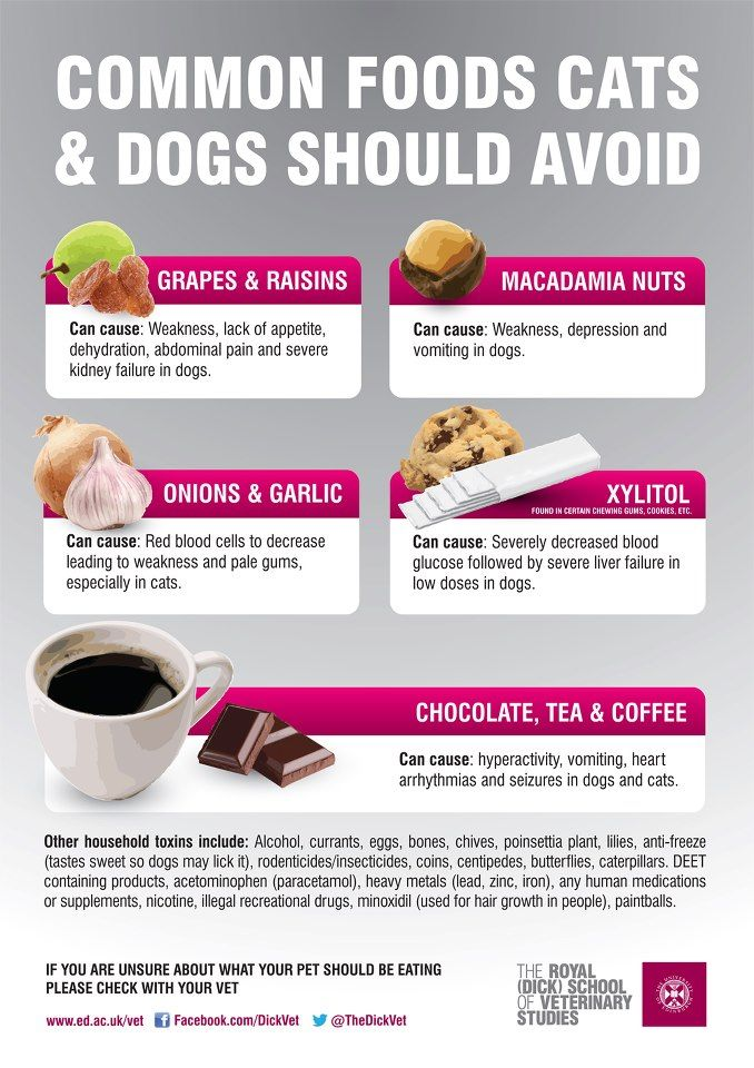 The Royal (Dick) School of Veterinary Studies releases an infographic via #socialmedia highlighting common foods cats and dogs should avoid. Great inspiration for your content calendar! What is your expertise? Share it!   #smm #contentmarketing