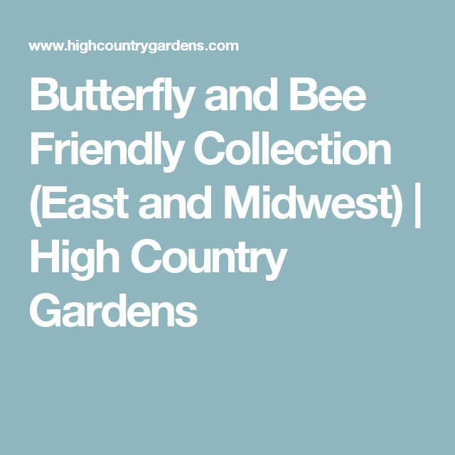 Butterfly and Bee Friendly Collection (East and Midwest) | High Country Gardens