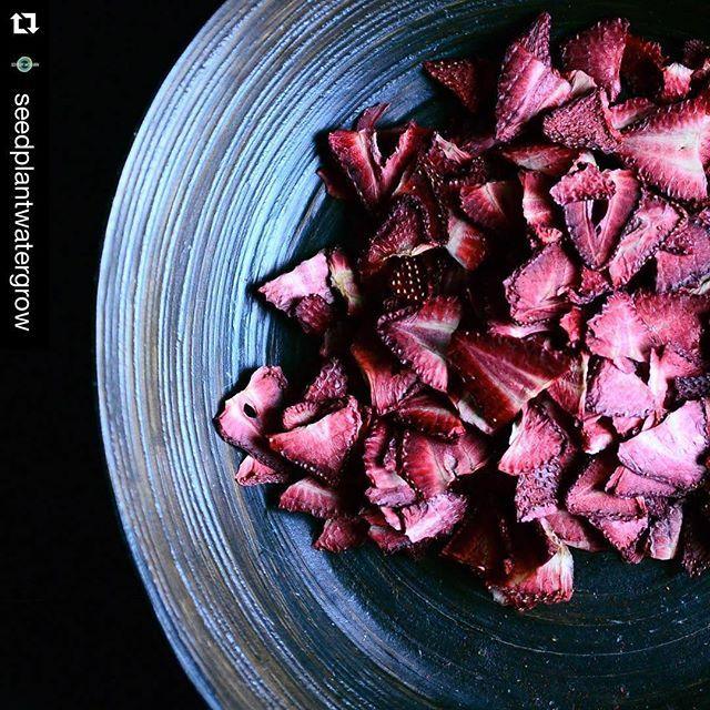 Fresas deshidratadas. 😍🍓😍#dehydrated #strawberries #fresa #deshidratada #driedfruit #superfood