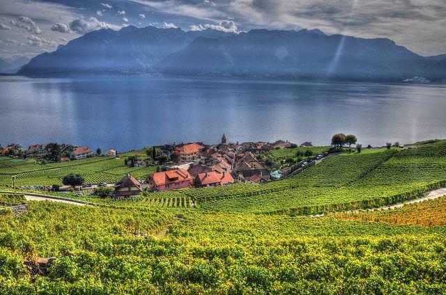 レマン湖とラヴォー地区の葡萄畑 スイス