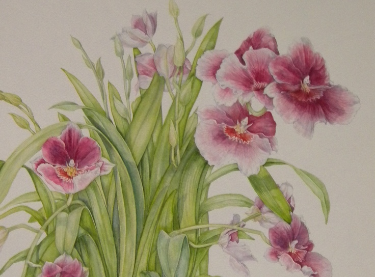 Pansy Orchid, watercolor by Mireille Belajonas, 2010