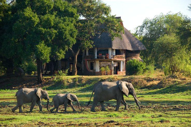 Regulars at Luangwa Safari House