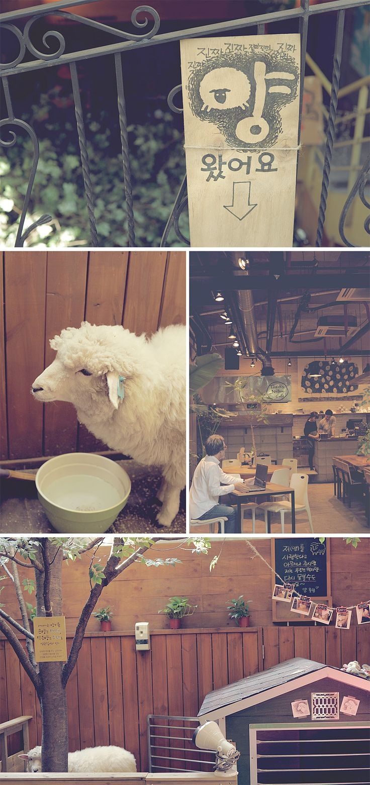 thanks nature cafe aka sheep cafe in hongdae, seoul