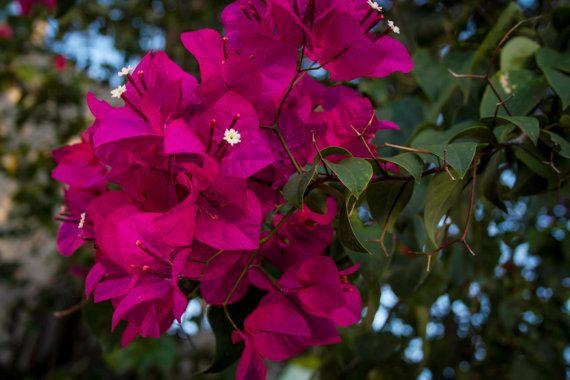Tropical Flower, Purple, Sunset colours, Fine Art by garcisssa, $10.00