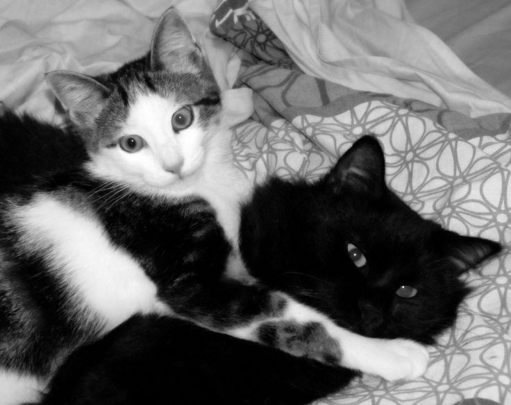 My lovely cats <3