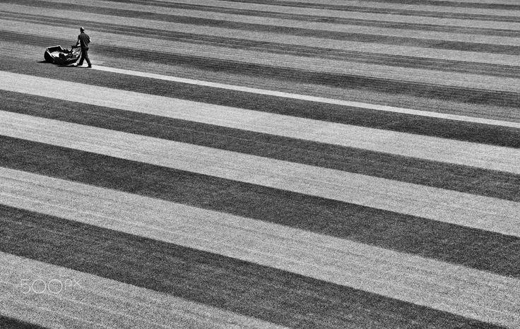 Man Cutting Stripes in Grass - The Lawnmower Man.