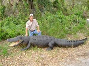 Hunting in Florida offers year-round access to wild hog and alligator ...