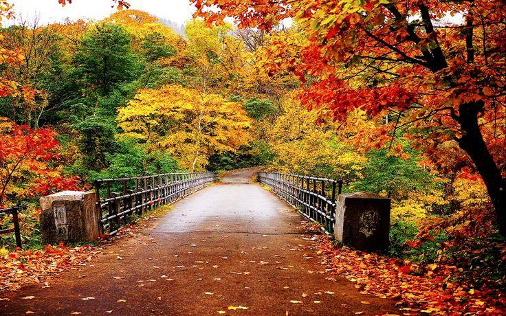 Autumn Wallpaper 35867750 1280 800 1280x