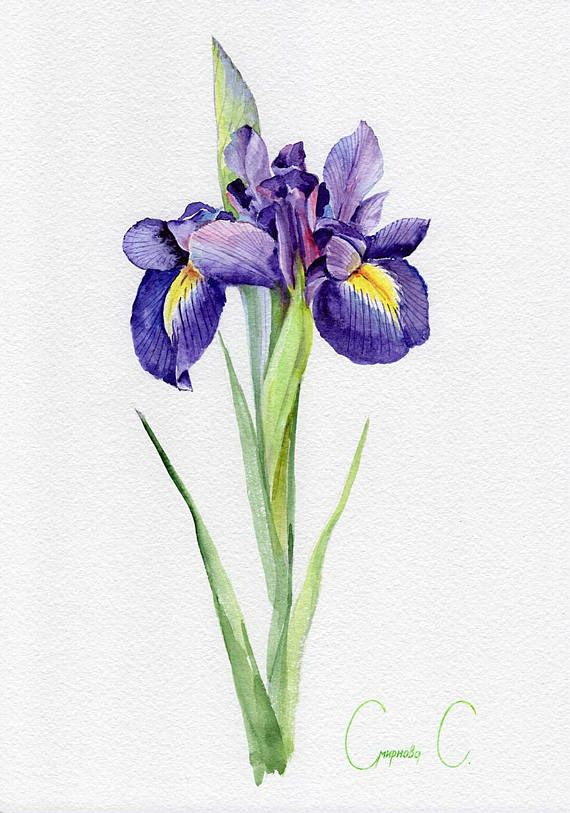 Original Watercolor Painting From The Artist My Mother Svetlana Smirnova Svetlana Is Professional Watercolor Flower Painting Iris Drawing Floral Painting