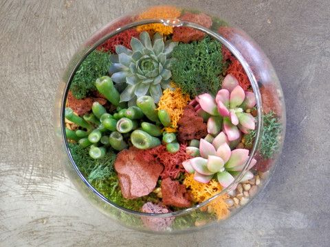 "(E) Succulents terrarium in a 6"" bubble ball glass"