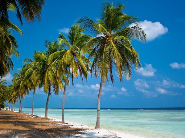 Image result for Don't Visit! Places To Avoid Inside Your Andaman Tour