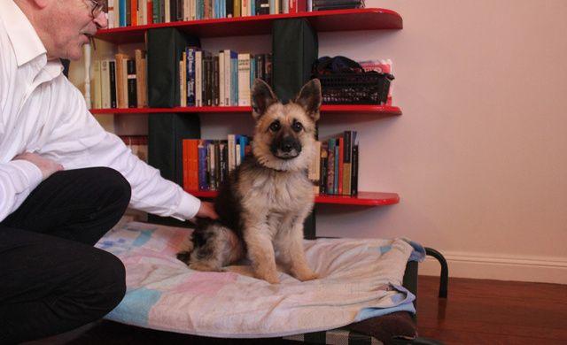 Tiger e un ciobănesc german în vârstă de trei ani, care suferă de nanism | VICE Romania