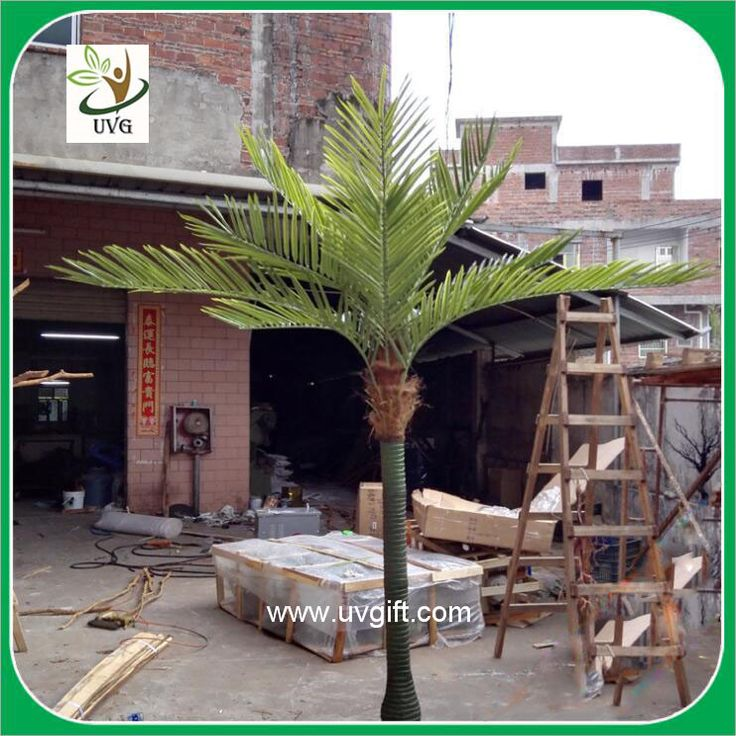 Innovotion Co Ltd Emailcontacts Mail: The 25+ Best Palm Trees For Sale Ideas On Pinterest
