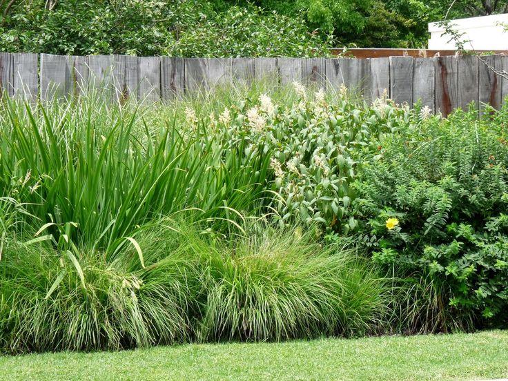 Gramineas, veronica y herbaceas