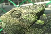Climate change threatens survival of common lizards -- ScienceDaily
