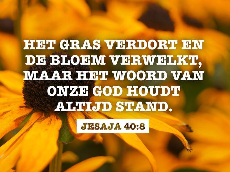 Het gras verdort en de bloem verwelkt, maar het woord van onze God houdt altijd stand. Jesaja 40:8