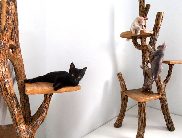 Climb-a-Tree . If your playful feline enjoys pretending that he is the king of the outdoors, then ...