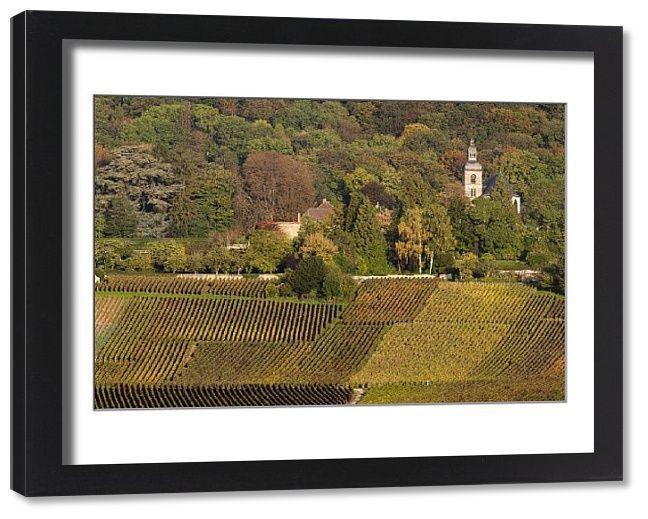 Print Of France Marne Champagne Region Hautvillers Vineyard View Champagne Region Marne France