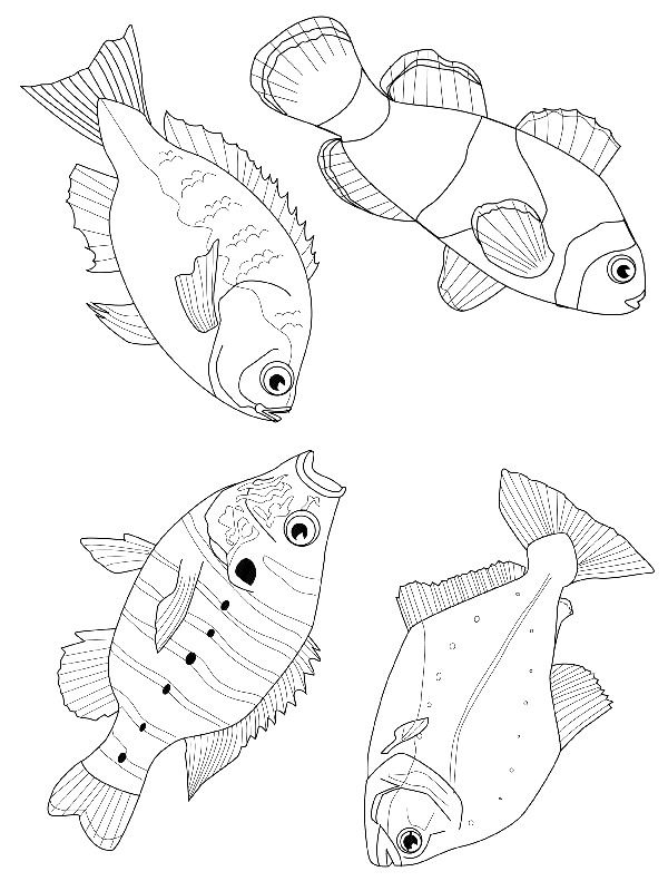 coloring page Fish - Fish ✖️ART: Adult Coloring Pages➕More Pins Like This At FOSTERGINGER @ Pinterest ➖