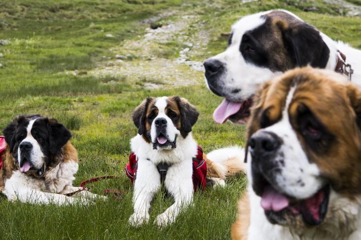 Σκυλί έσωσε τα δύο κοριτσάκια της οικογένειάς του