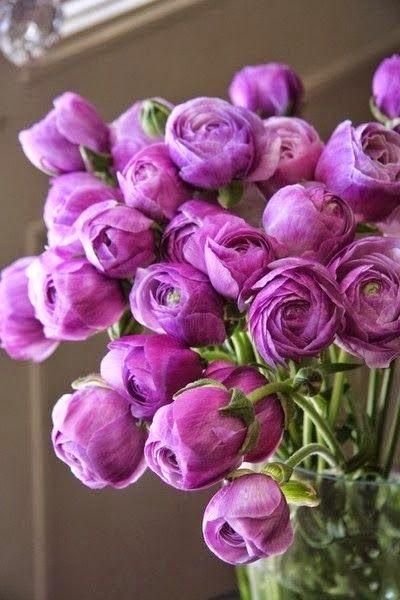 Radiant Orchid : Cette couleur qui est une nuance du  violet  sera tendance pendant cette année 2014, tout savoir sa signification, les idées reçues, les effets thérapeutiques et psychologiques, en décoration, association des couleurs.....