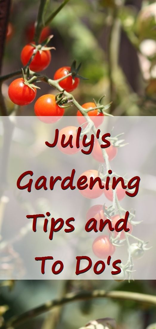 July's Gardening Tips and To Do's. Focus and save time so you can beat the heat and enjoy time off. via @RobinFollette