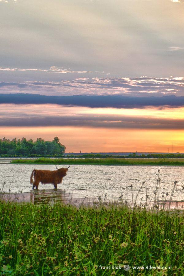 Park Dintelse Gorzen, Volkerak river, North Brabant (NL)