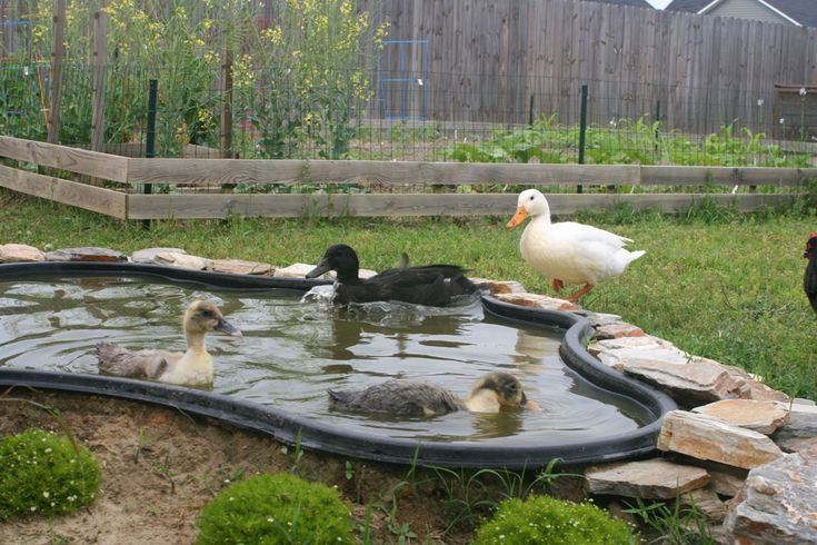 Love this idea for the duck lounge area. | Backyard ducks ...