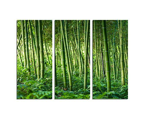 44 best Bambus Bilder images on Pinterest Bamboo, Feng shui and - bambus im wohnzimmer