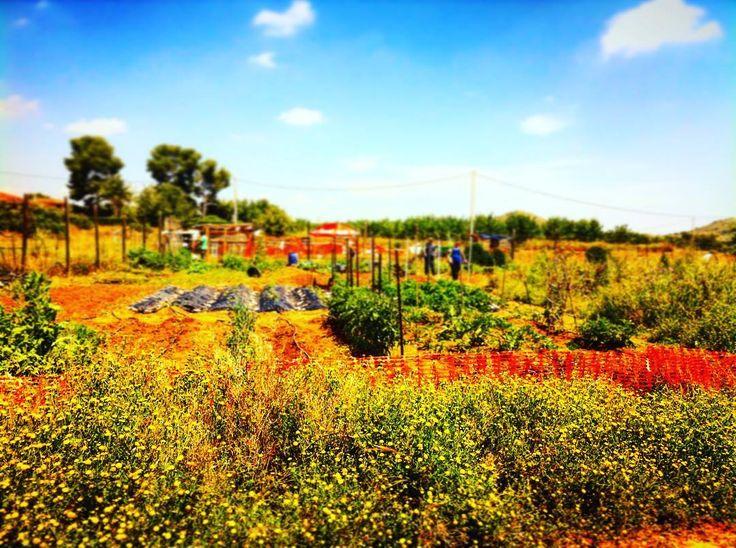 Natura est vita #CultivandoElAgro #nature #grows #plants #sky #green #blue