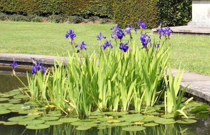 35 Outstanding Garden Landscaping Ideas With Water Ponds Ponds