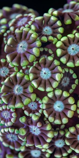 hmmm - is it really a plant?? It doesn't matter, it is still beautiful . Alveopora coral